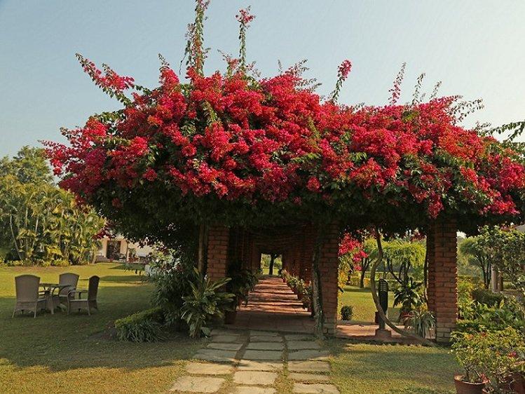 NaturOville Retreat Rishikesh India 16