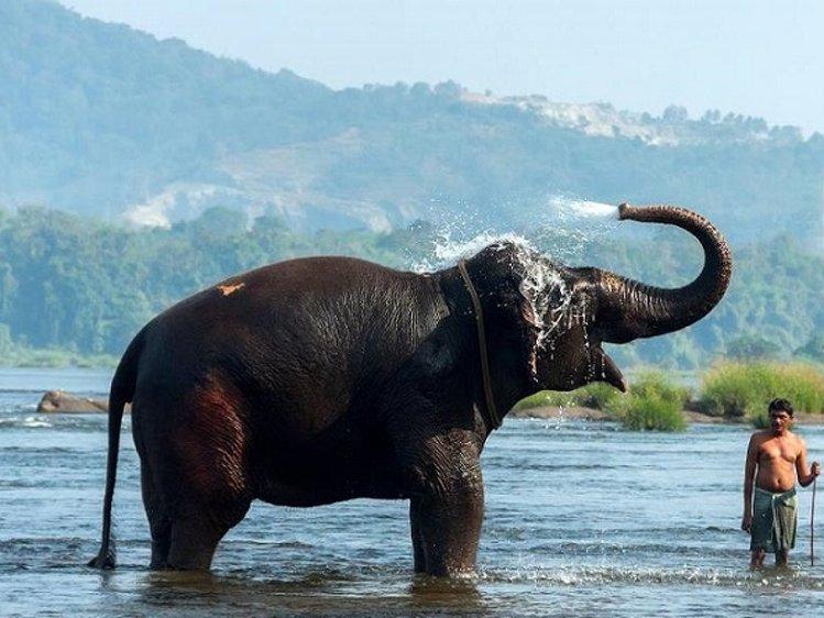 Elephant Pass Ayurveda & Yoga Retreat  Ernakulam India 8