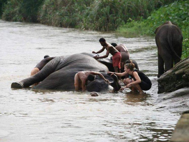 Elephant Pass Ayurveda & Yoga Retreat  Ernakulam India 9