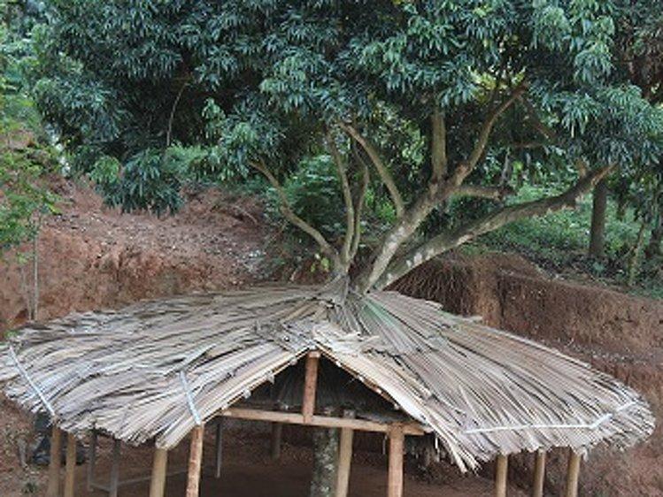 AyurWayanad Ayurveda Kalari Marma Wayanad India 14