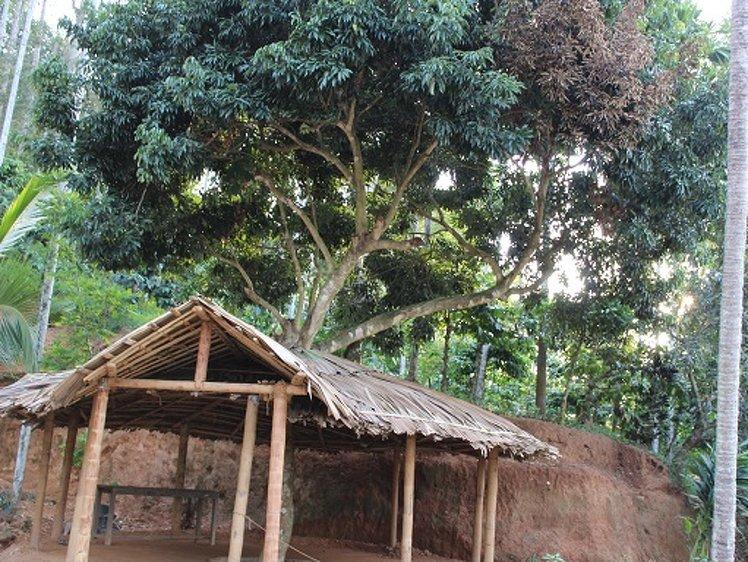 AyurWayanad Ayurveda Kalari Marma Wayanad India 15