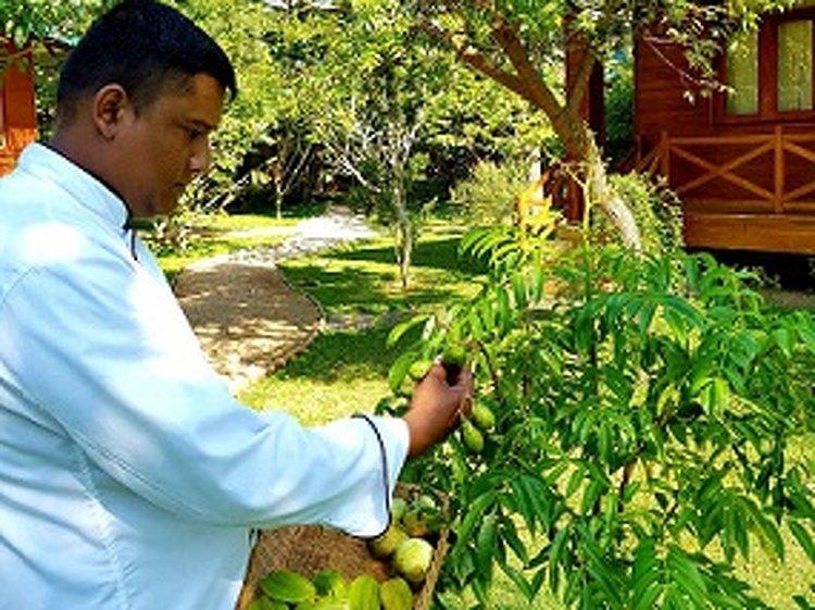 Karunakarala Ayurveda Resort Negombo Sri Lanka 22