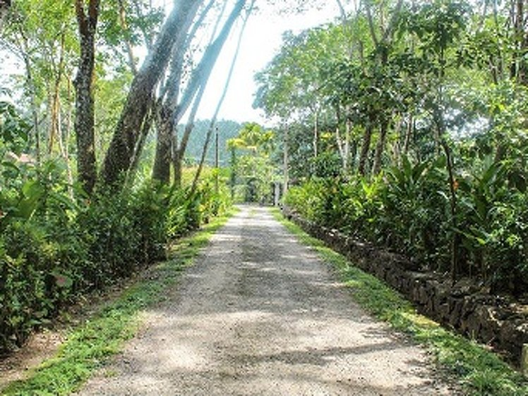 Plantation Villa Kalutara Sri Lanka 9