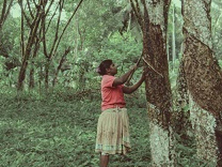 Plantation Villa Kalutara Sri Lanka 16