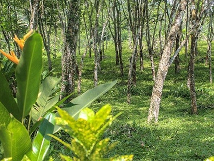 Plantation Villa Kalutara Sri Lanka 30