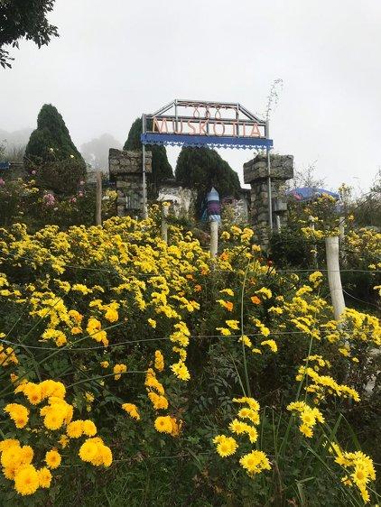 Muskotia Wellness Wellness Retreat with Yoga @ Nainital Himalayas 3