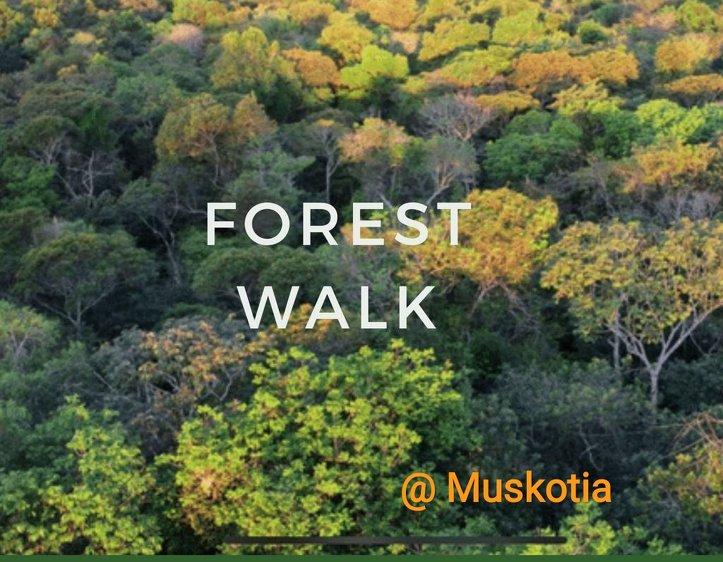 Muskotia Wellness Wellness Retreat with Yoga @ Nainital Himalayas 4